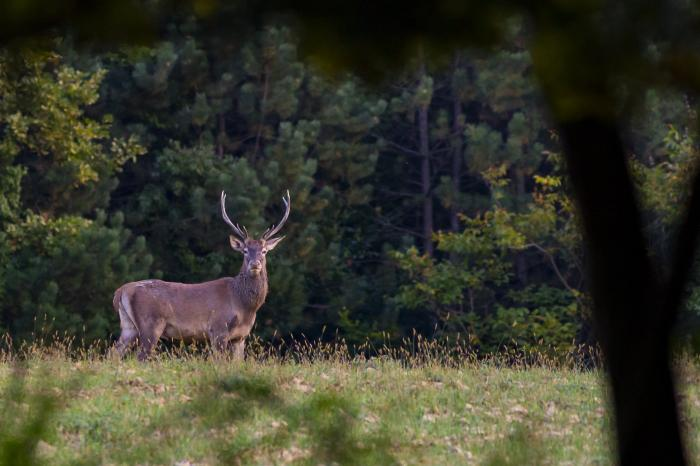 Színes őszi programokkal várnak a nemzeti parkok és erdészetek