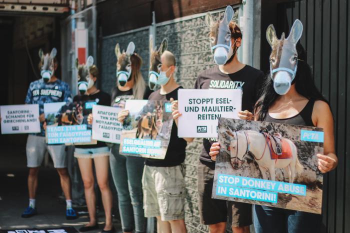 Állatvédők a görög kormányhoz fordultak a Szantorinin szenvedő szamarak érdekében